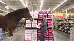 A Puppy, Wolf And Clydesdale Horses: 2015 Budweiser Super Bowl Commercial 'Lost Dog' Goes Viral [Video] Majestic Horse, Beautiful Horses, Animals Beautiful, Budweiser Commercial, Clydesdale Horses, Horse Videos, Best Commercials, Best Bud, Marketing Techniques