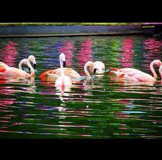 Flamingos! Such beautiful birds