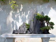 Planters - Penjing/Bonsai Stone Planting Tray