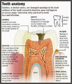 A diagram of your tooth and what you need to be aware of when it comes to avoiding decay and infection. #smiles #oralhealthmatters #dentistry #dentist #Teeth #Smile #DentalImplants #DentalCare #DentalHealth #CosmeticDentist #Tooth