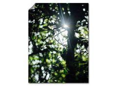 Wald Sonnenstrahlen Poster