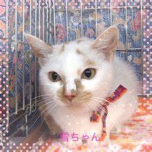 里親さんブログユキちゃんの一年御報告 - http://iyaiya.jp/cat/archives/71390