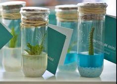 Se você quer levar plantas do Inhotim para casa , tem o Inhotim mini.