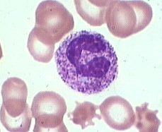 Материнство > развернутый анализ крови