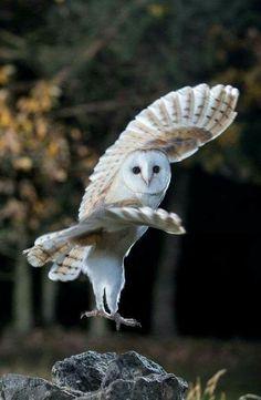 Owl Photos, Owl Pictures, Baby Animals, Funny Animals, Cute Animals, Beautiful Owl, Animals Beautiful, Owl Bird, Tier Fotos