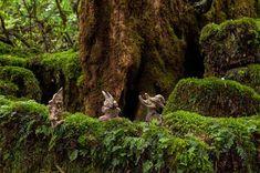 2010年 #流木オブジェー2  ★   #流木 #流木アート #屋久島アート #インテリア #Driftwood Art #Interior