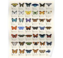 """Eleanor Lutz - """"I checked out six butterfly field guides from the library and picked out some of the species I thought were the most unique and beautiful. It's meant as a chart of decorative species illustrations rather than an educational infographic. Borboleta Tattoo, Butterfly Species, Butterfly Gif, Unique Butterfly Tattoos, Butterfly Symbolism, Monarch Butterfly Tattoo, Butterfly Exhibit, Butterfly Project, Rainbow Butterfly"""