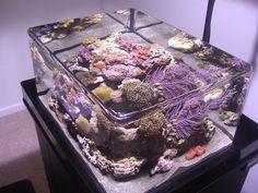Classic ZeroEdge Overflowing Fish Tank