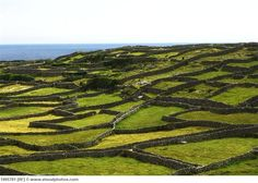 Stone fences everywhere! Aran Islands, Ireland