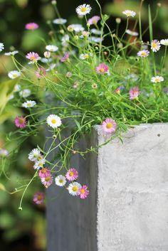 Sommerblomst frø Bakkestjerne Greenhouse, Private Garden, Flowers, Planters, Garden, Plants