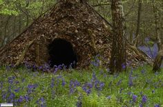 Wilderness Survival Hut Learn how to survive any situation at dansdepot.com