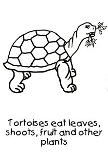 How to draw a tortoise for toddlers Step by step PDF to teach