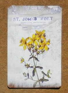 """St. John's Wort is a plant of Midsummer.  It is considered one of the most powerful herbs against Faery Magick and can be used in charms to penetrate glamours or break charms and spells.  Infused with incense, it can protect an area and will help one to see the Fae on Summer Solstice.  You can use this simple incantation for protective charms: """"St John's wort, scaring from the midnight heath, the witch and goblin with its spicy breath."""""""