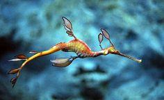 dragon de mar - Buscar con Google