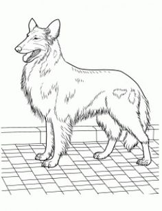 Siberian Husky Coloring Page | Coloring pages for Adults ...