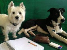 ASILO LIBERTY DOG: Animali Domestici Concorezzo - Rigagialla.it