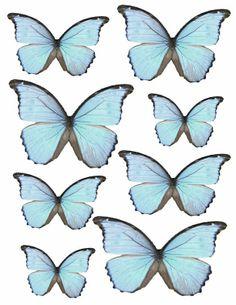 Free blue butterflies