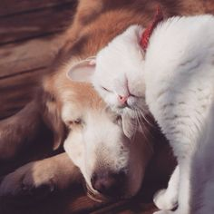 Gatos y perros. Cats and dogs Animals And Pets, Funny Animals, Cute Animals, Baby Animals, I Love Cats, Cute Cats, Tier Fotos, Stuffed Animals, Pet Birds