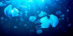 Queimaduras de água-viva: 10 dicas, tratamentos e remédios naturais