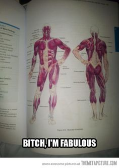 Fabulous anatomy…