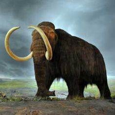 The Woolly Mammoth exhibit at the Royal British Columbia Museum in Victoria. Image: Wikimedia Commons/Mammut