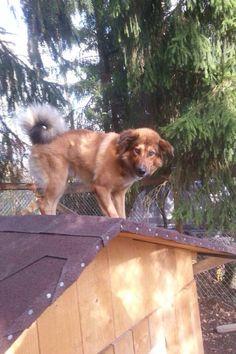 ★ Delicious Brown ★ EDELLEEN EDELLEEN KADOKSISSA !!!!!!!! LAHTI/HOLLOLA Koira kadonnut iltapäivällä 12.12 Miekkiöstä. Tottelee nimeä Roki. Jos näette, saatte kiinni tai kuulette jonkun nähneen koiran , niin ilmoitathan omistajalle: Mari→ 044 272 38 44 Kiitos! Lue lisää: https://www.facebook.com/tuula.lappalainen.9/posts/792900160781366