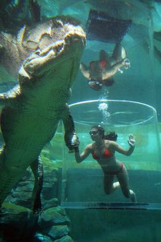 Think caging diving with Great White Sharks is the scariest thing on the planet? Think again. Crocosaurus Cove in Australia's Darwin has just upped the ante.
