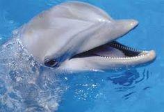 animales tiernos fotos - Buscar con Google