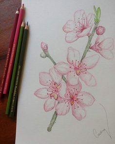 Flor de pêssego em lápis aquarelável