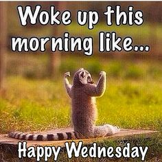 Woke Up This Morning Like....Happy Wednesday                                                                                                                                                     More