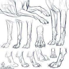 Canine forepaws ✤ || CHARACTER DESIGN REFERENCES | Find more at…