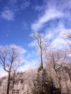 十勝の樹氷