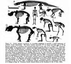 Size comparison of Australian megafauna