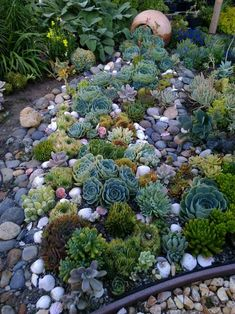 Spilling succulents creek bed. Easy to install, looks amazing, add some seashells as accents, no need to be an expert!!! Succule… | Tortoise Enclosure