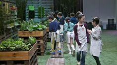 Os mini-chefs vão explorar a horta. #MCJunior #Supermercado