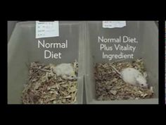 This is an amazing video showing the effects of one of ageLOC's key ingredients on a geriatric mouse compared to his control twin. Which mouse do you want to be? NuSkin Distributor ID AS00043244