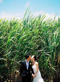 Wendy Laurel Photography - maui wedding - sugar cane fields