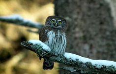 Polana Gąsiorowska - Gorczański Park Narodowy - Wspaniałe miejsce do obserwacji ptaków - Przewodnik turystyczny po Polsce byStep.pl