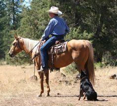 Urricelqui Ranch - Kelpies