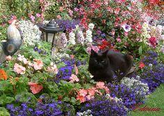 Great cats garden.