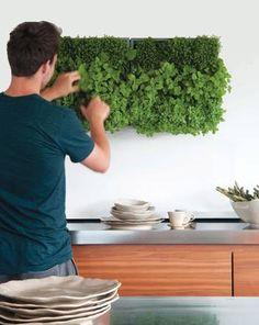 Pflanzen pflegen, wandbegruenung, gruene wand, Foto: wandbegruenung.com