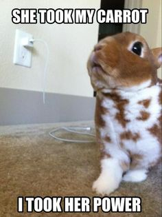 Rabbit Bites Through Electricity Cord