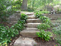 landscaping steps | willow landscape design | field stone steps with hosta | 5011