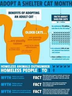 June is Adopt a Shelter Cat Month! #catinfographics
