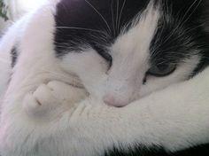 Hobbes Katze | Pawshake