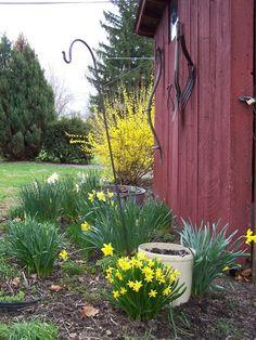 Herb garden in spring