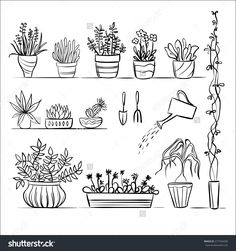Pot plants and tools sketch. Hand drawing set, gardening vector collection