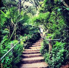 The infamous steps - The 'Kokoda Trail' - Upper Ferntree Gully, Victoria, Australia. A real fitness test! Victoria Australia, Historical Photos, Ranges, Perth, Postcards, Melbourne, Trail, Sidewalk, New Homes