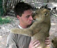 Lion cub love = cutest video EVER