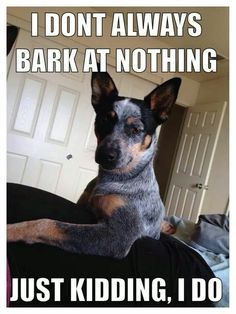 Funny Dog I Don T Always Bark At Nothing